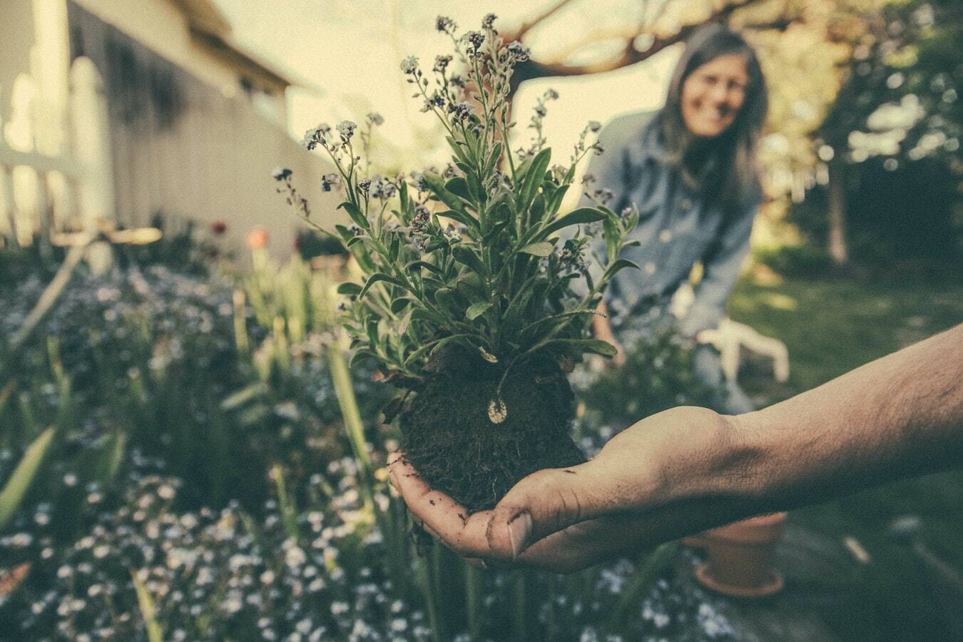 Pennies Help Gardens Against Bugs - Facts About Money