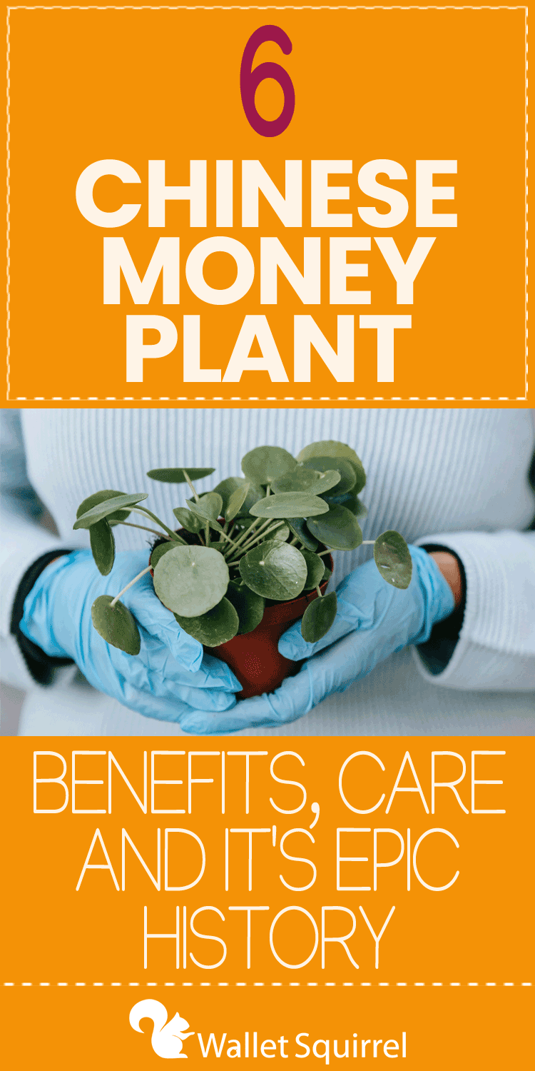 """Money plants are famous for the exciting myths around their benefits, but their recent popularity on social media has brought a new wave of interest for home offices. As personal finance enthusiasts, we can't help but cover the benefits of money plants, different types of plants considered """"Money Plants,"""" and their exciting history around wealth."""